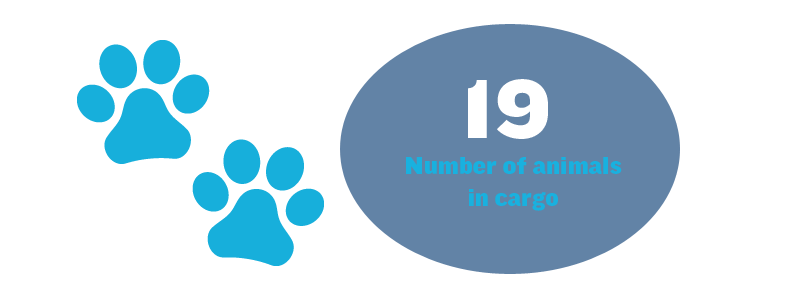19 - Number of animals in cargo